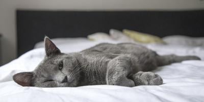 Dlaczego warto się wysypiać?