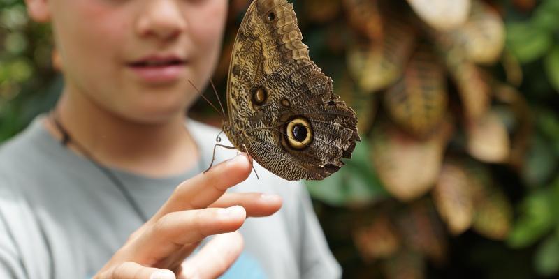 """""""Dzieci motyle"""" cierpią z powodu delikatnej skóry"""