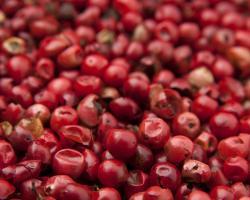 Jagody goji - zdrowe owoce