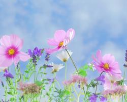 Sałatka z kwiatka – piękno połączone ze zdrowiem