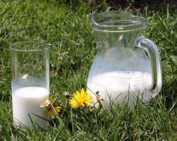 Nietolerancja laktozy - nie zawsze wymaga wykluczenia produktów mlecznych