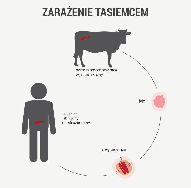 infografika - zarażenie tasiemcem