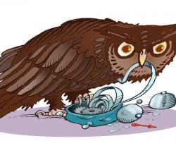 Uwaga: nocne sowy wcześniej umierają