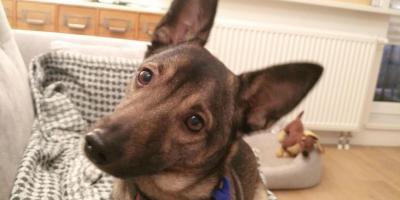 Pies jako wsparcie dla zdrowia. Pod pewnymi warunkami